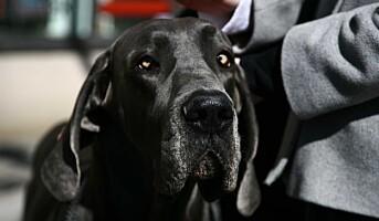 Mistenkelige personer flykter fra narkotikahunder